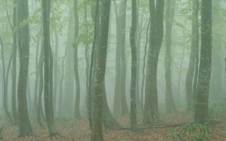 Free Vista DreamScene based on Mac OS X Forest Wallpapers