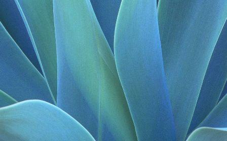 Free Plants DreamScene Videos